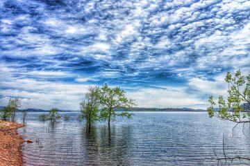 Tree in Carter Lake