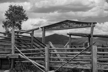 Carter Mountain Cattle Company