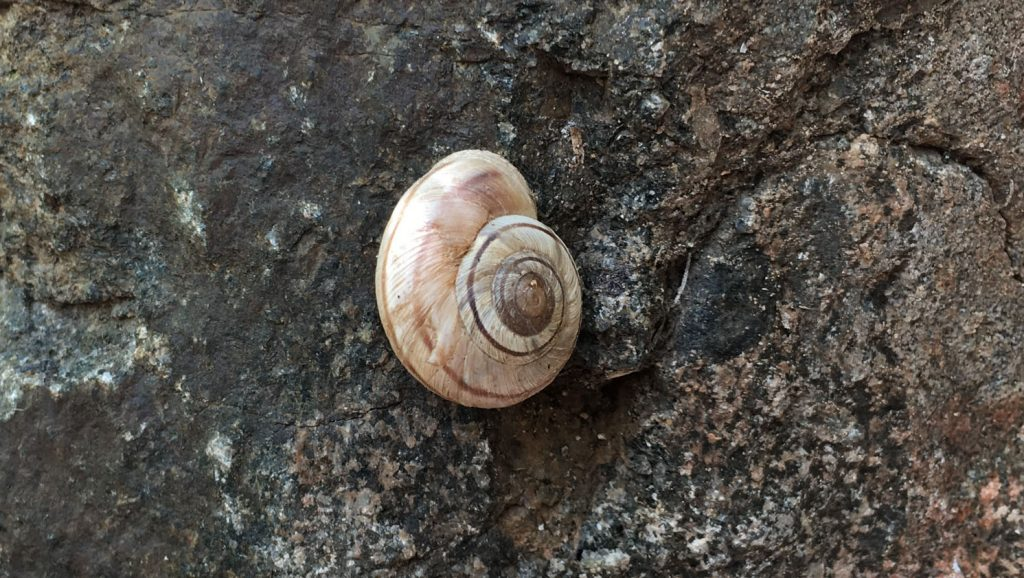 Snail in the SOB Draw